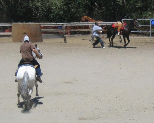 http://www.niceboots.org/~evergrey/horsestuff/Show0808/fail.jpg