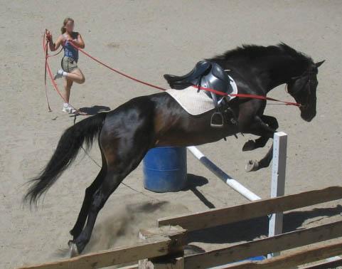 http://www.niceboots.org/~evergrey/horsestuff/Show0808/nugget.jpg