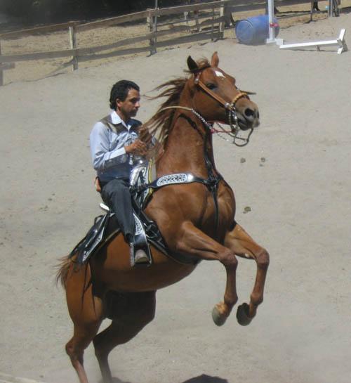 http://www.niceboots.org/~evergrey/horsestuff/Show0808/reiningguy.jpg