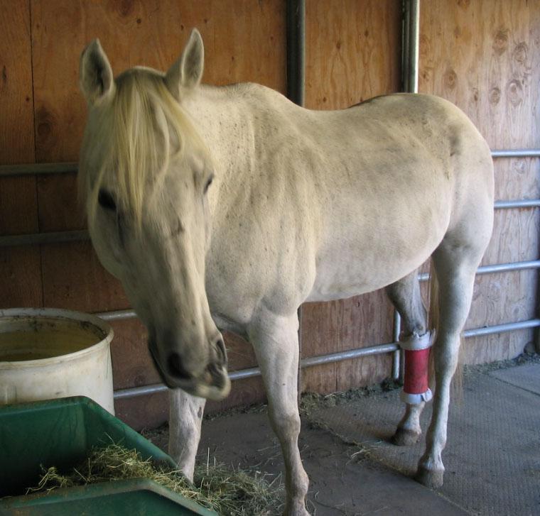 http://www.niceboots.org/~evergrey/horsestuff/Solomon1008/funnymouf.jpg