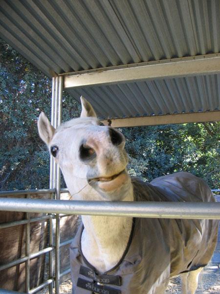 http://www.niceboots.org/~evergrey/horsestuff/Solomon1008/neighborjoline.jpg