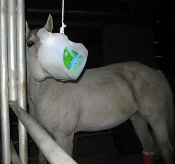 http://www.niceboots.org/~evergrey/horsestuff/Solomon1008/toy.jpg